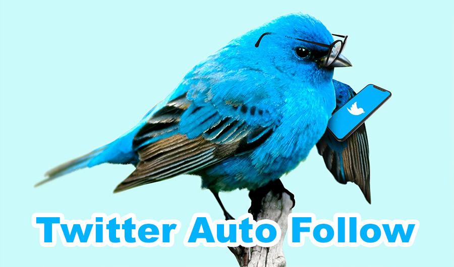 twitter auto follow